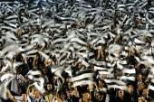 Buducnost vs Partizan – Fara emotii pentru sarbi!